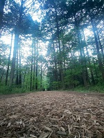 散歩 FIL マイニング ZIPANGFIL